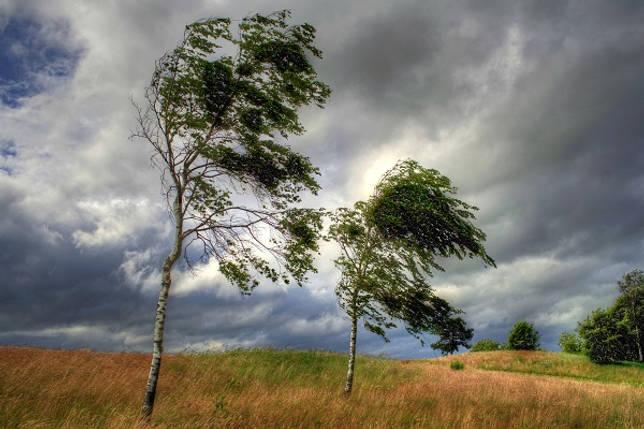 Виды ветров